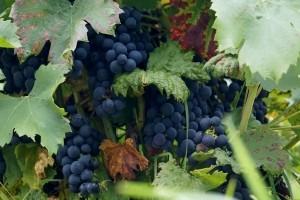 wine-641113